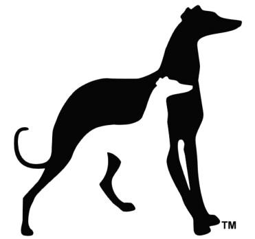 greyhound adoption ca